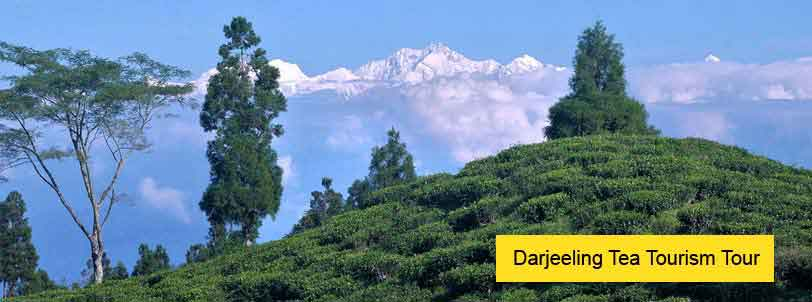 darjeeling tea tourism tour