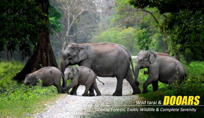 dooars package tour from siliguri