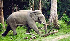 dooars-package-elephant-during-sight-seening