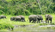 dooars-package-jungal-elephant-safari