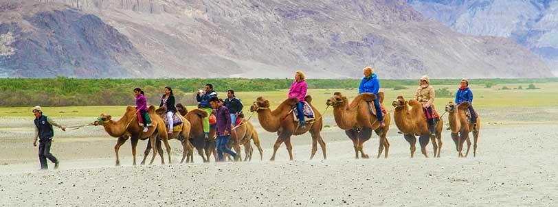 Double Hump Camel Safari in Nubra Valley