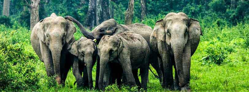 Dooars Package Tour with Gorumara, Jaldapara National Park
