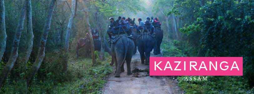 kaziranga elephant safari, assam