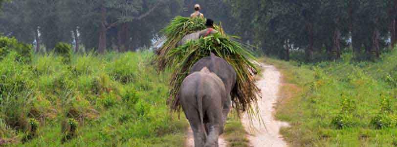 Kaziranga Elephant Safari Package Booking