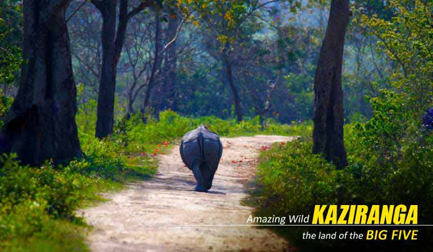 kaziranga jungle safari