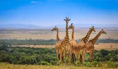 Maasai Mara- Kenya Tour Package