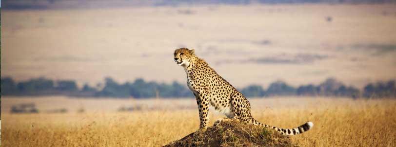 L.Naivasha- Masai mara