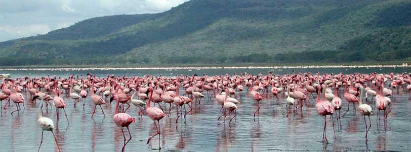 Nairobi - Amboseli