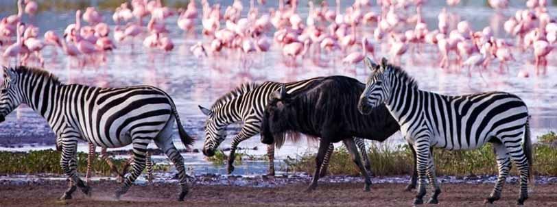 Amboseli - Lake Naivasha