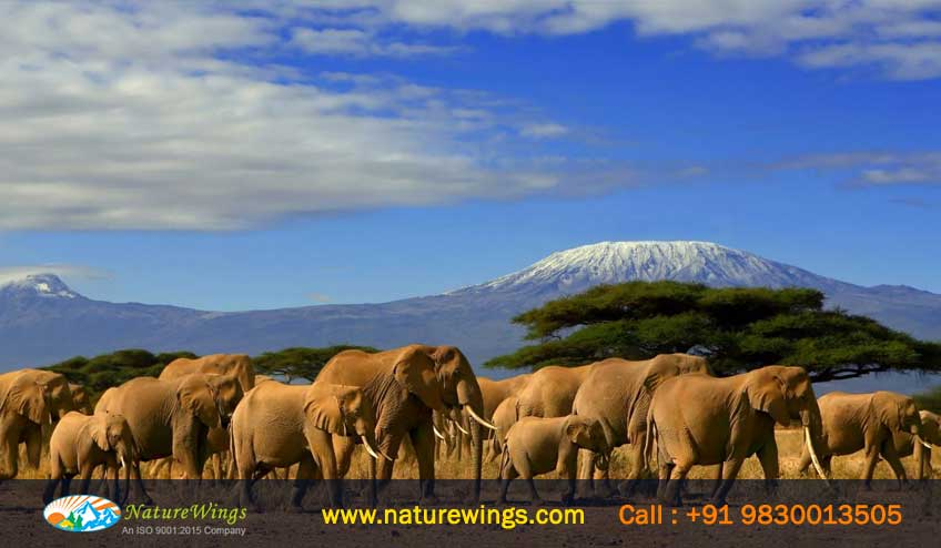 amboseli national park- Kenya Tour Package