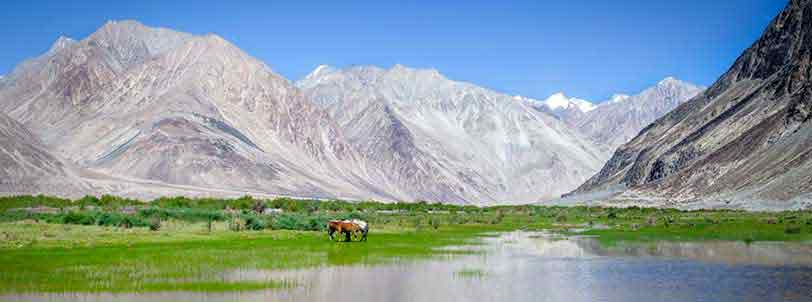 Ladakh Nubra Valley Tour Packages