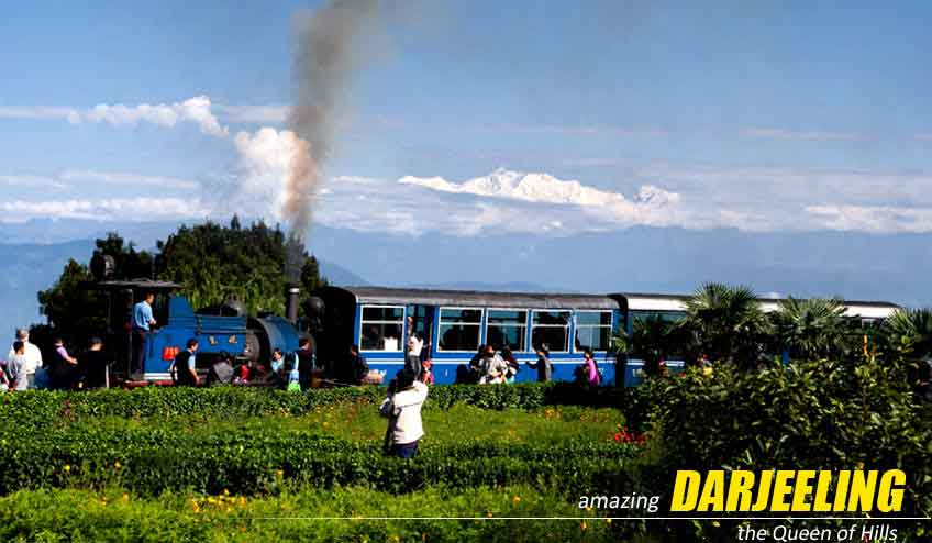darjeeling lamahatta package tour