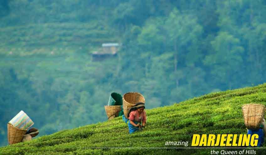 darjeeling lamahhata package tour from kolkata