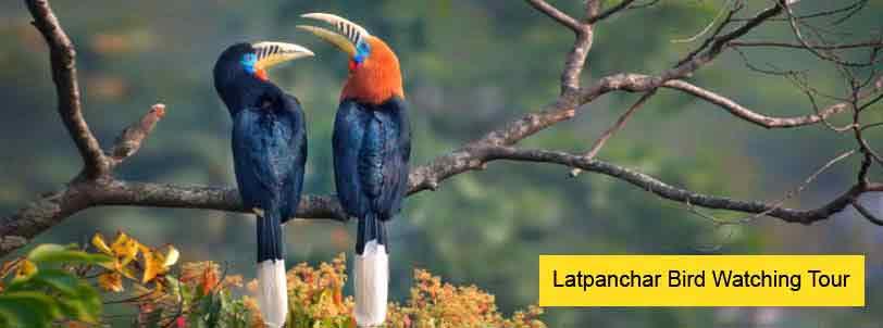 latanchar bird watching tour