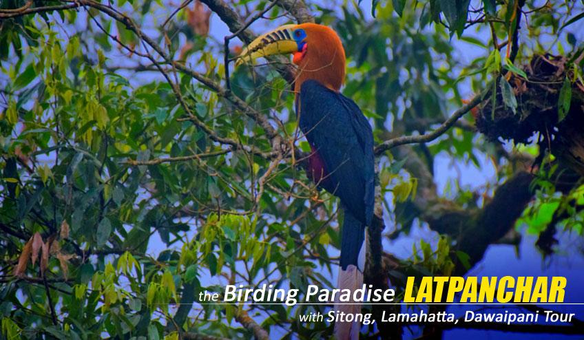 bird watching tour latpanchar