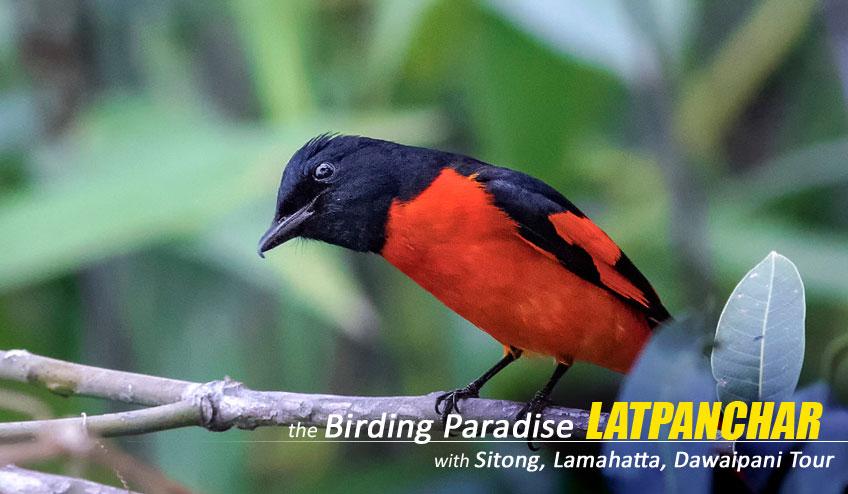 latpanchar bird watching tour