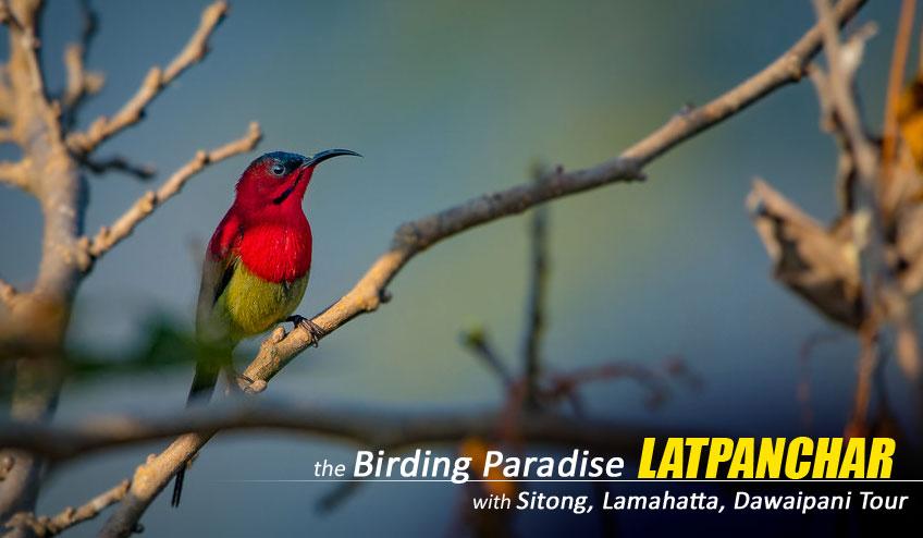 latpanchar birding package tour