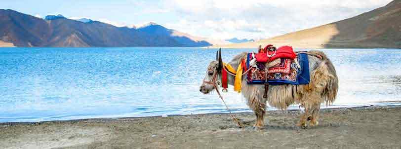 Pangong Lake Ladakh Tour Packages