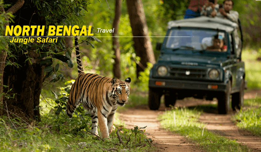 Jungle safari during North Bengal Package Tour