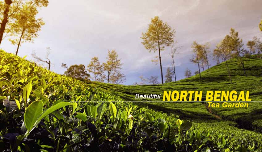 north bengal tour packages
