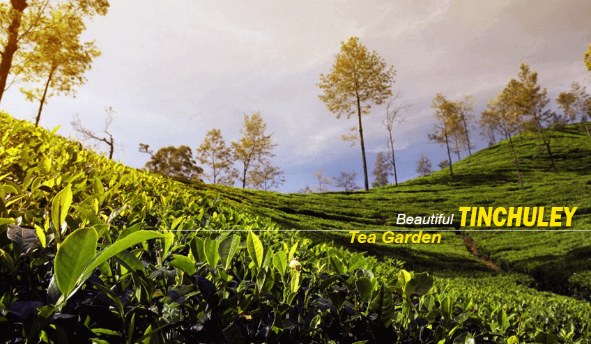 Tea estate during tinchuley Package Tour