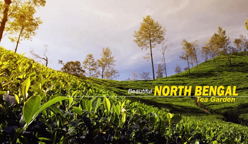 Visit tea garden during North Bengal Package Tour