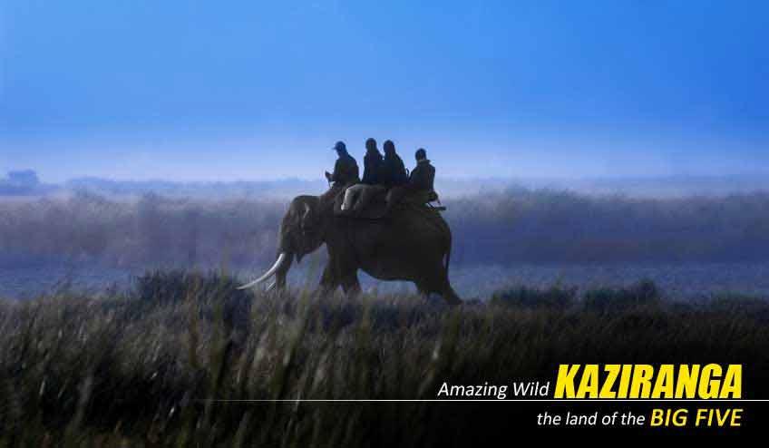 kaziranga elephant safari package tour