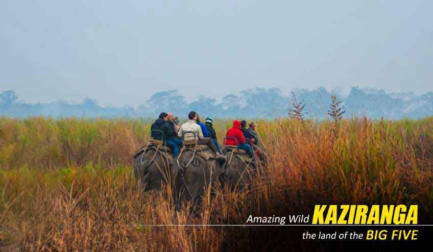 kaziranga elephant safari packages