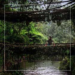 Root Bridge of Cherrapunji Tour