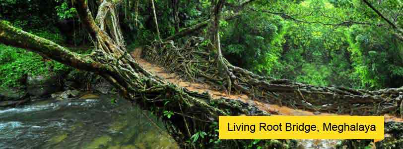 north east tour with living root bridges meghalaya
