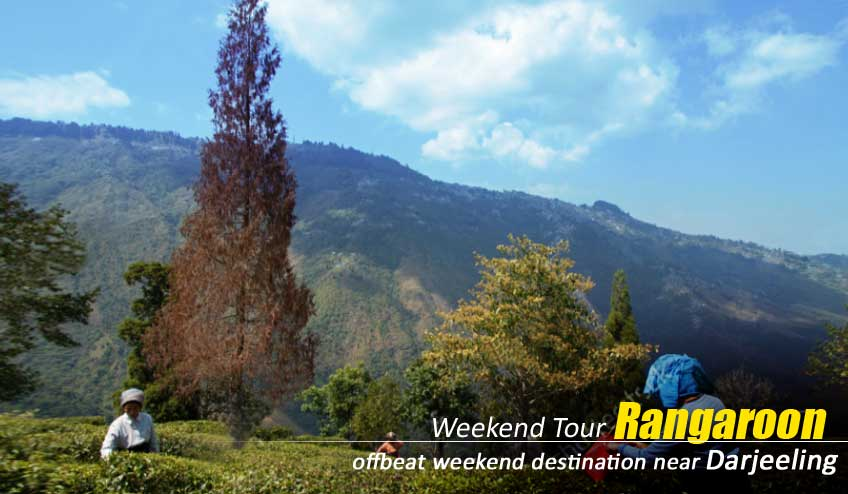 darjeeling offbeat tour with rangaroon
