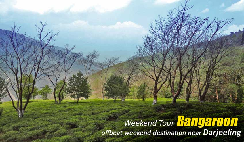 rangaroon tea tourism package tour