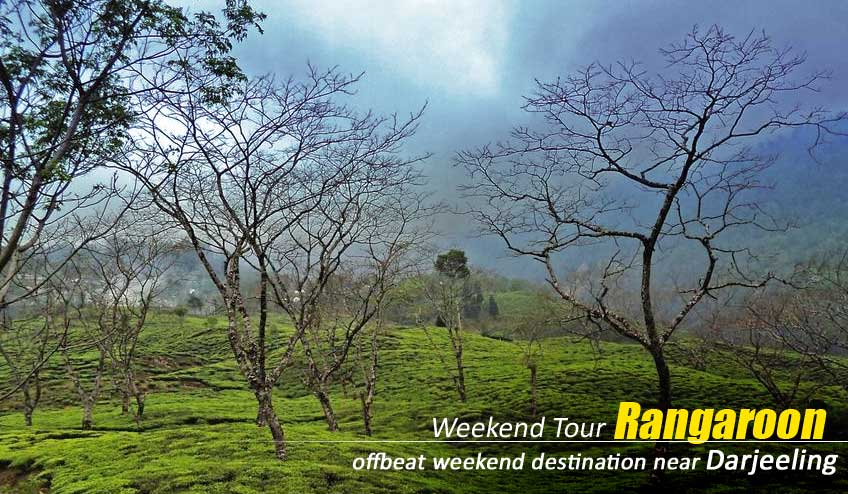 rangaroon tea tourism tour packages