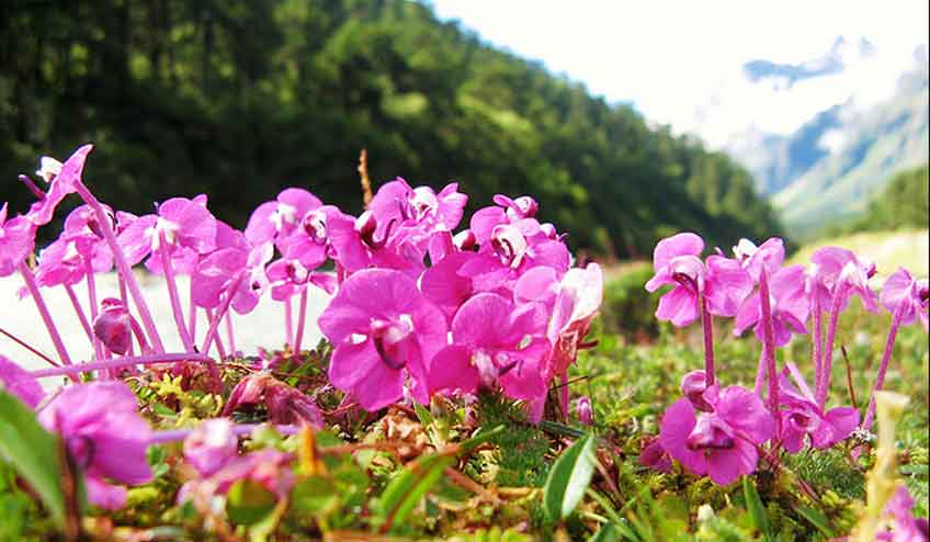 sikkim-Yumthang-Valley-of-Flowers