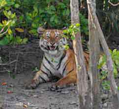 Sundarban Package Tour Inclusions