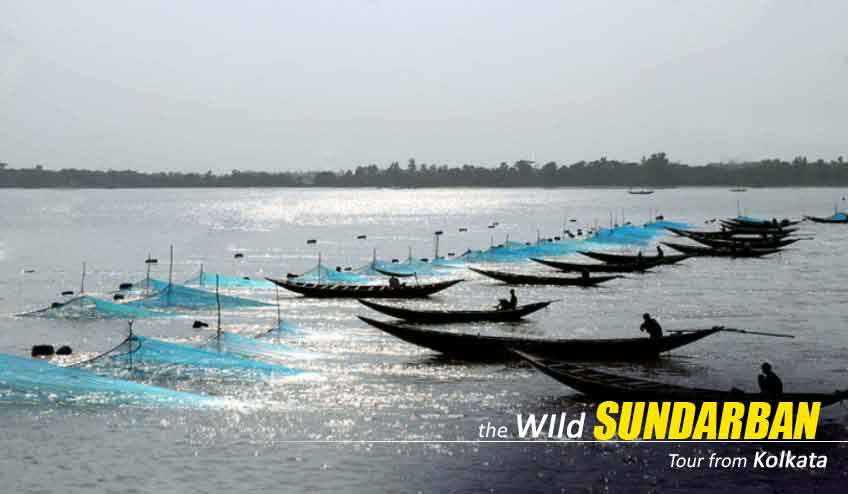 sundarban package tour cost