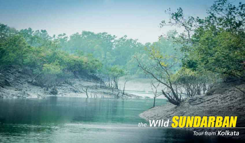 sundarban tour cost from kolkata
