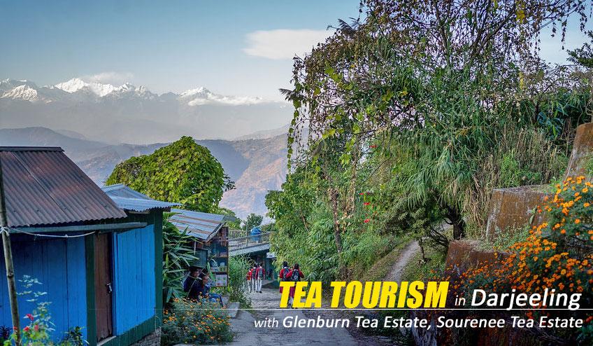 darjeeling tea tourism tour packages