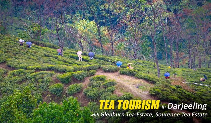 darjeeling tea tourism