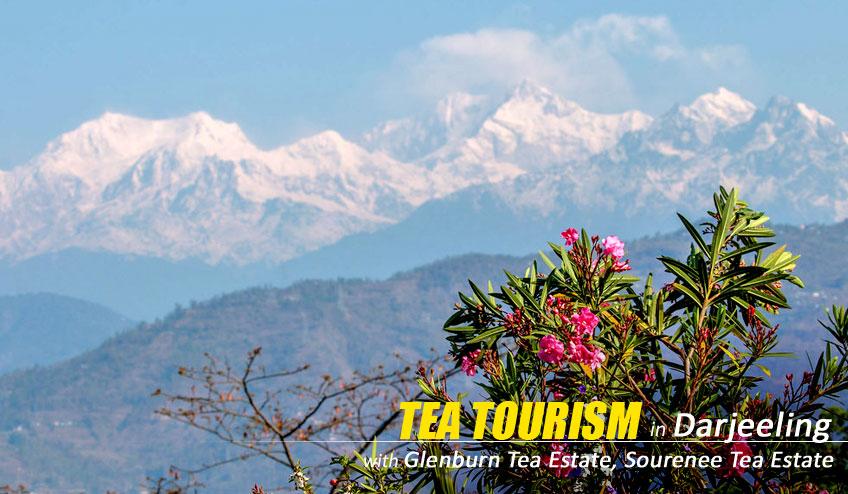 tea tourism darjeeling