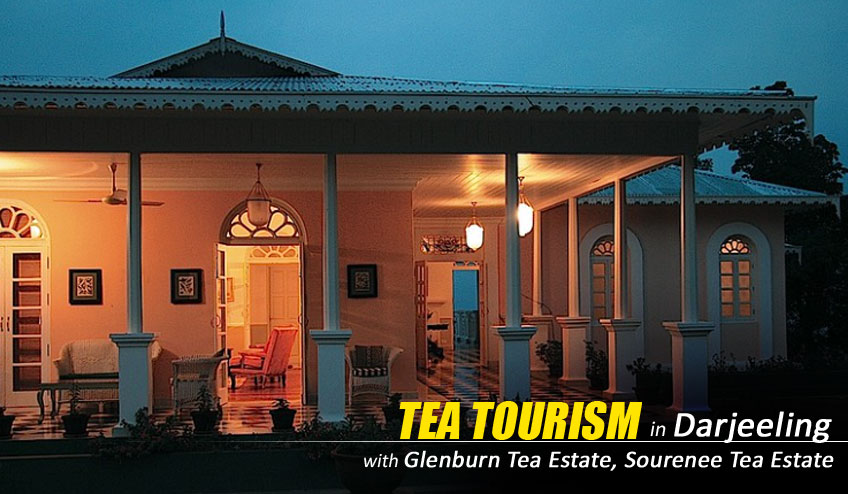 tea tourism in glenburn tea estate