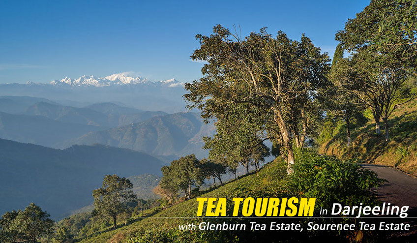 tea tourism package tour darjeeling