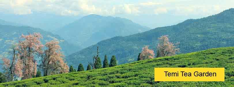 temi tea garden