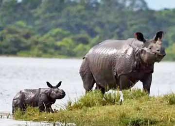 Wild Assam Kaziranga Package Tour